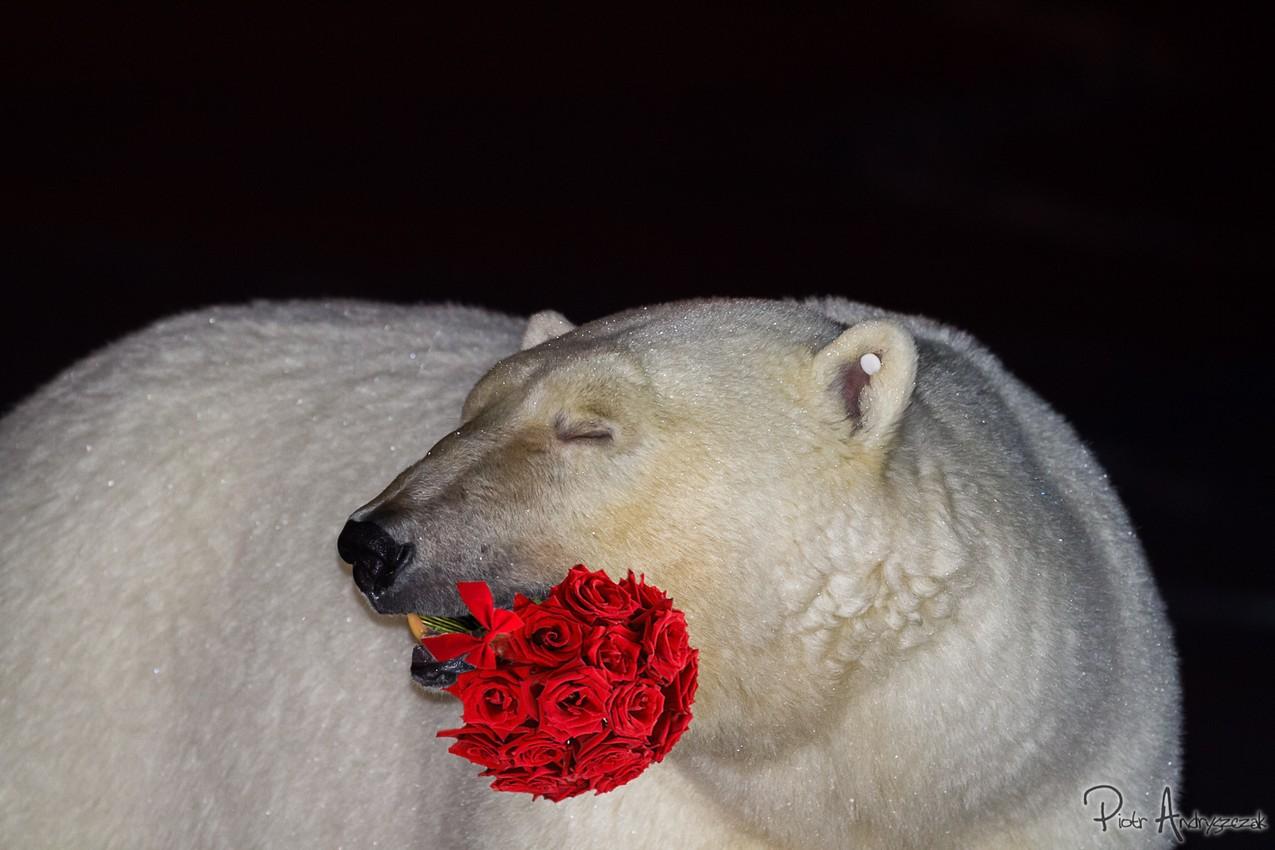 Nawet niedźwiedzie ślą życzenia...