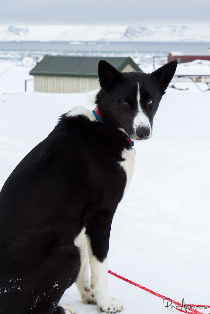 Przybysz z Longyearbyen