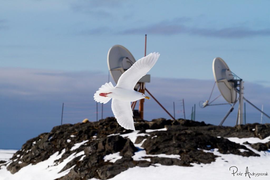 Mewa blada na tle anten satelitarnych