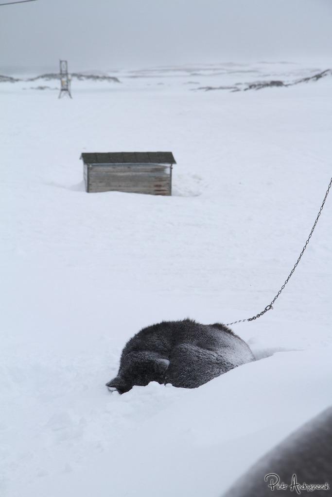 Brzydal przyprószony śniegiem