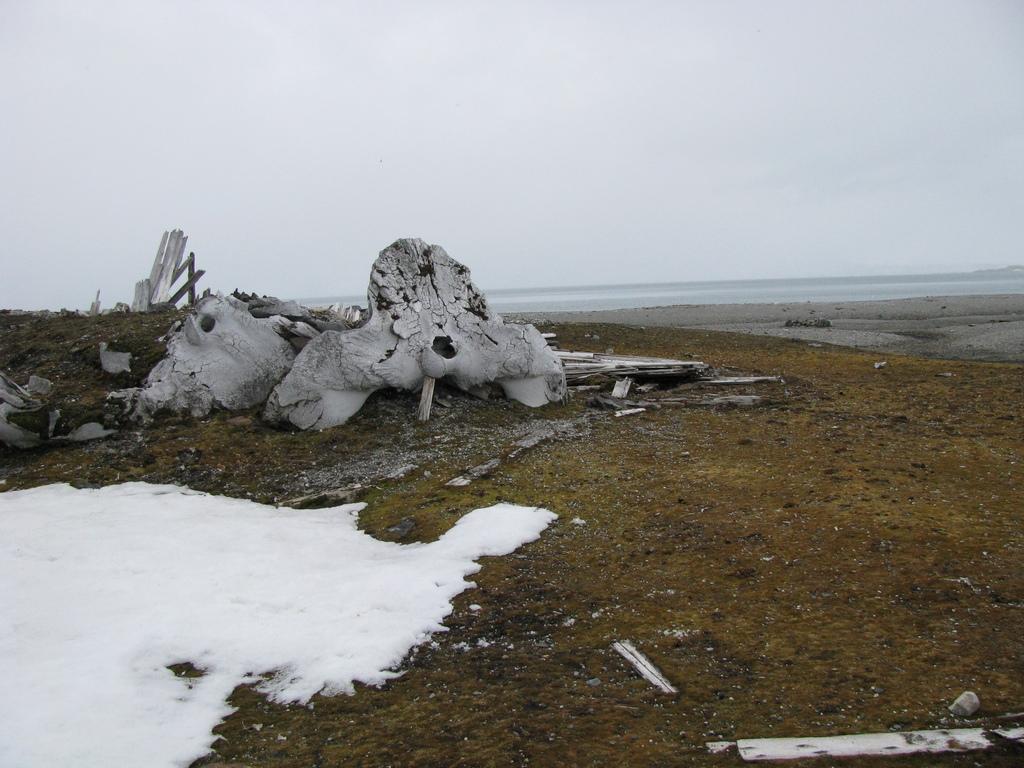 Pozostałości po polowaniach na wieloryby