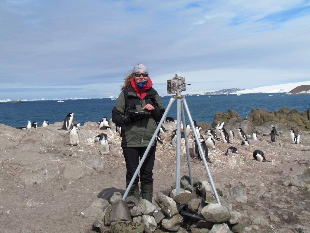 Marta przy fotopułapce w kolonii pingwinów maskowych