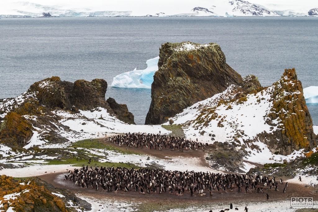 Pingwinisko czyli smród i hałas