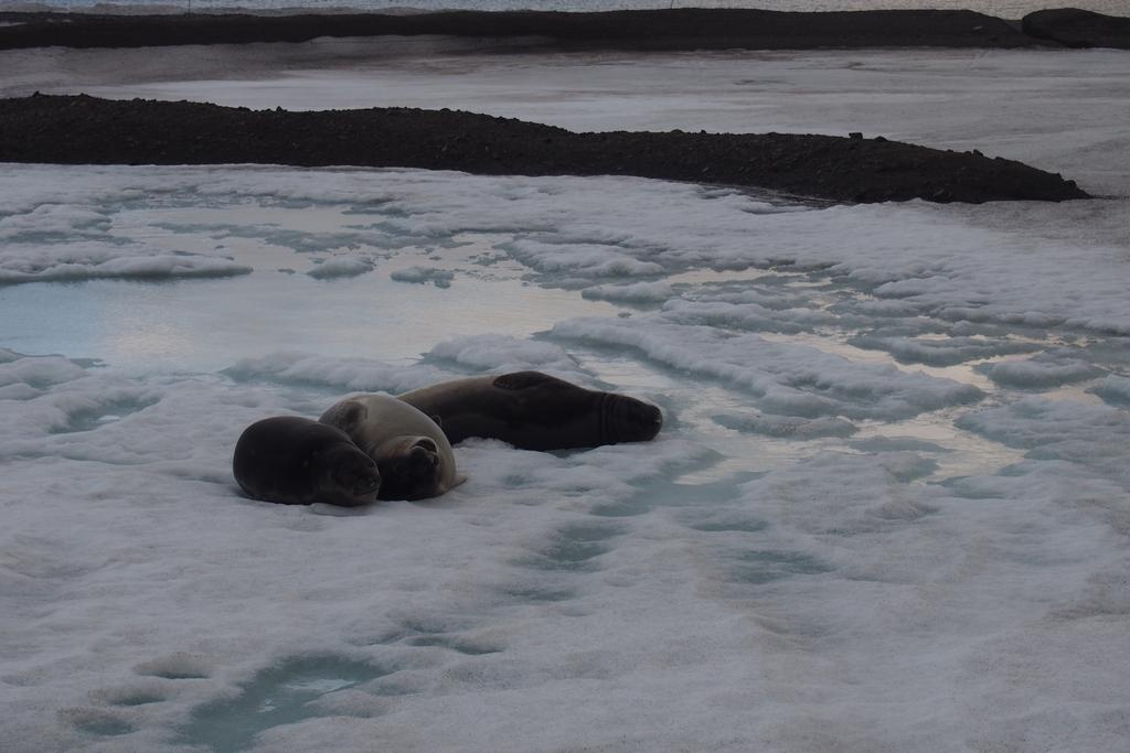 Słonie morskie śpią w naszym zbiorniku!