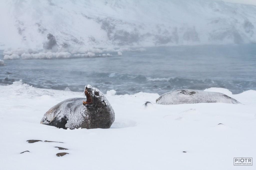 Uchatka w Pardise Cove