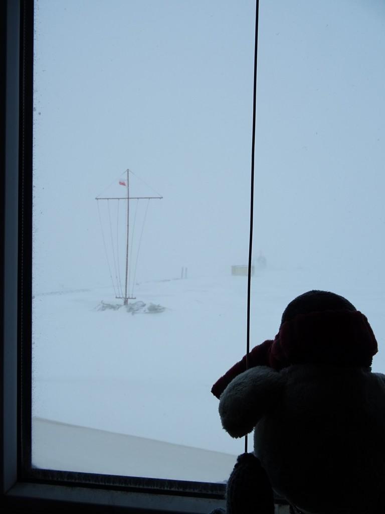 Pingwin w zadumie patrzy przez okno
