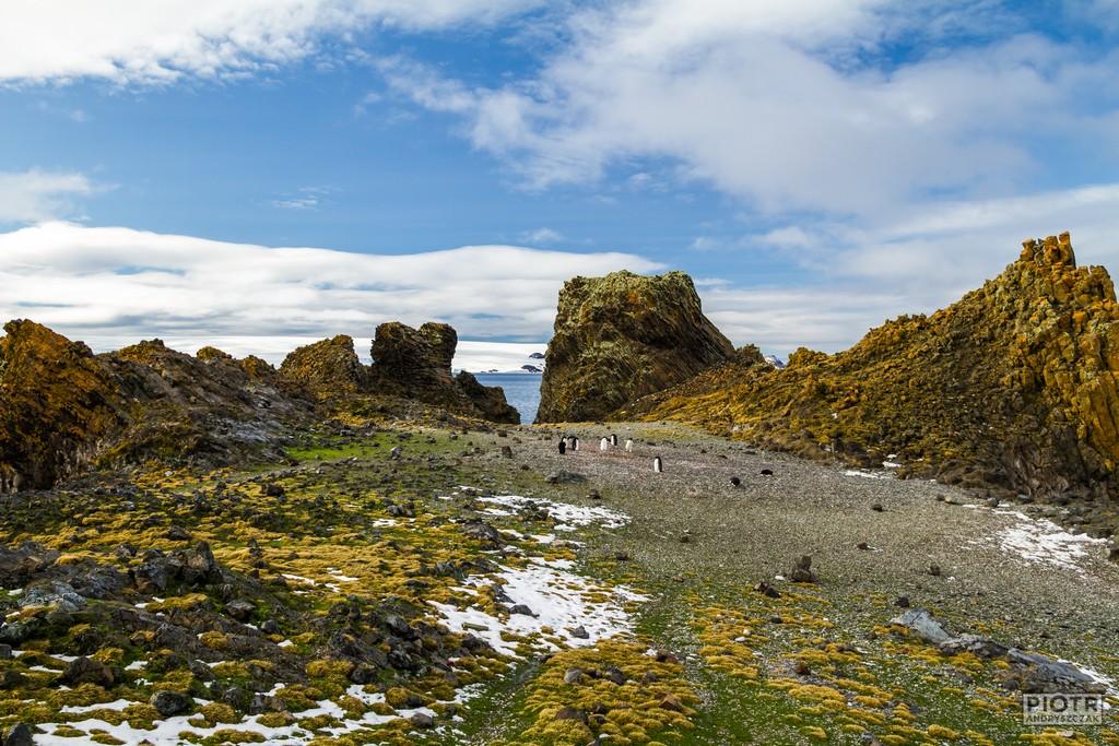 Pingwinisko przy Rakusa Point